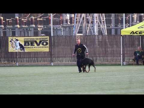 NIK 2016 Saskia Kosters  de Boer Eagan van de Fivelborgh Obedience 82 P
