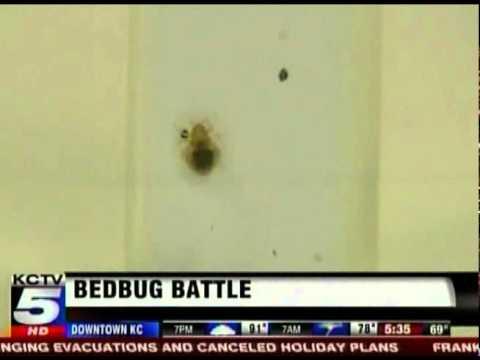 Schendel Pest Services on KCTV 5 News