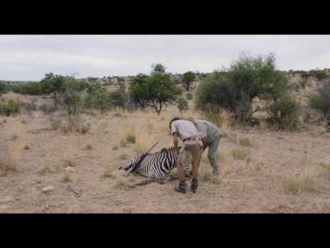 Safari - Trailer subtitulado en español (HD)
