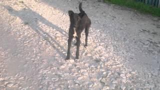 Câini liberi și periculoși pe străzile Durleștiului