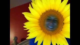 sunflowerr