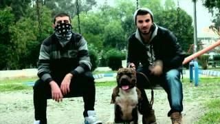 Wuki HD - Burada Pitbull