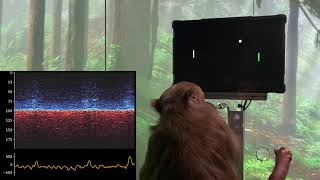 Monkey MindPong Picture-in-Picture