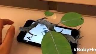 Giúp bé khám phá thế giới động vật qua công nghệ 4d thực tế ảo