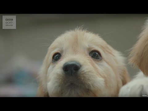 CUTE! Puppy Guide Dog Training | Earth Unplugged
