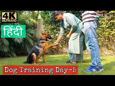 Dog Training - Day 5th | Sit , Lay Down ,Shake hand , Heel ,Bark | Puppy Basic Training in Hindi 4k