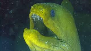 Stunning Aquarium & The Best Relax Music   2 Hours   Sleep Music   HD 1080P