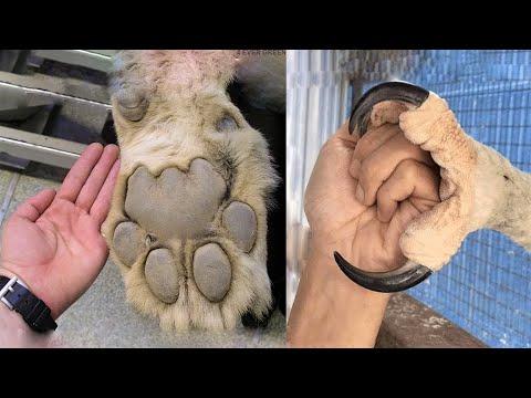 Животные с Самыми Большими КОГТЯМИ