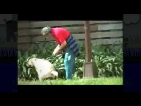 A dog's Business   Dog Poop removal service Long Island   Pooper Scooper