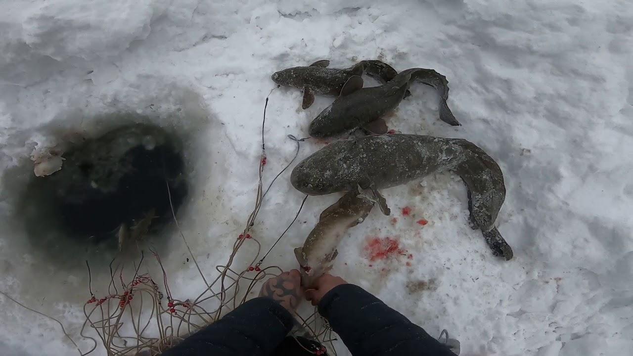 Ловля налима зимой на продольник