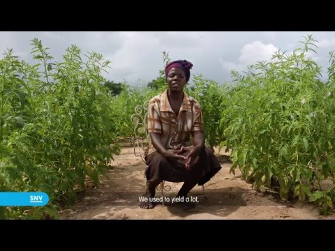 Seed of life   Zimbabwe SNV HD