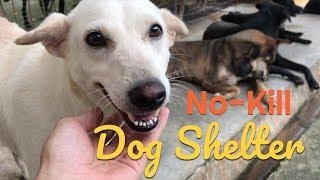 Visiting a No-Kill Dog Shelter!