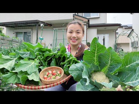Hái dâu tây, bông cải,măng tây,kale,cải ngọt-làm đất-xử lí đất đơn giản cho rau ngắn ngày #908