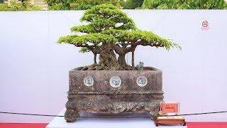 216 tác phẩm cây cảnh, bonsai đẹp nhất Việt Nam