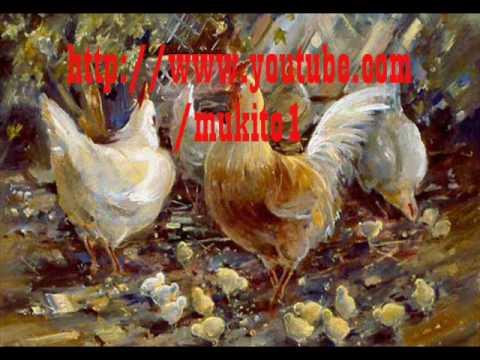 Jilguero del huscaran el buen gallo