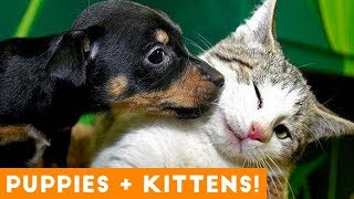 Ultimate Puppy and Kitten Cute Animal Compilation May 2018 | Funny Pet Videos