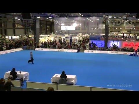 MyDOG: Final i Agria Freestyle Elite Challenge 2016