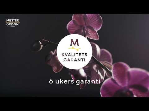 Kvalitetsgaranti på orkidéer fra Mester Grønn
