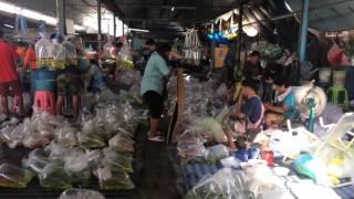 Biggest Aquarium Fish Market In India Part 1 Mp3toke