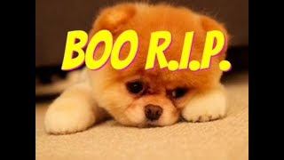 Boo Worlds Cutest Dog has Died :( this video is so Cute tho