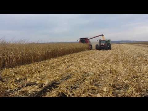 Pioneer Corn Plot 2013 {The Marsh} | Harvest