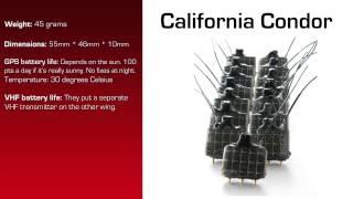 Watch video - GPS Data Logger for California Condor