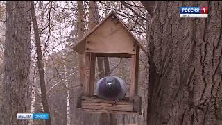 Омские орнитологи всерьез обеспокоены снижением популяции воробьев