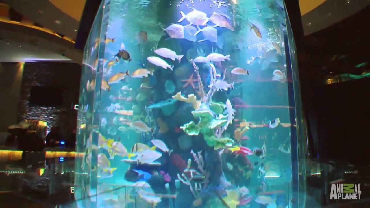 Wind Creek Casino Custom Aquarium Tanked Youtube