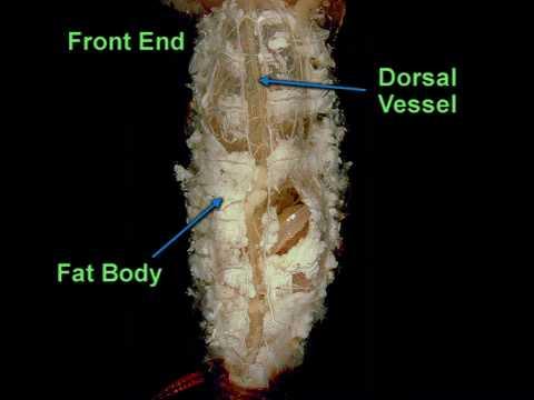 Excretory Organs in Invertebrates | Zoology