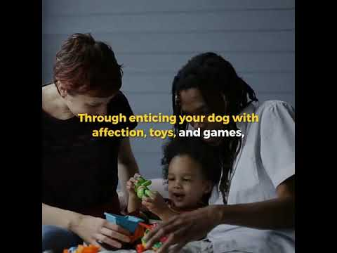 10 Pointers to Assist You with Puppy Training