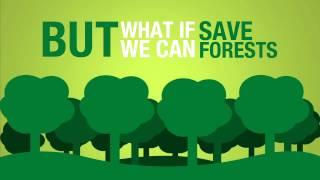 Tiết kiệm giấy để bảo vệ rừng