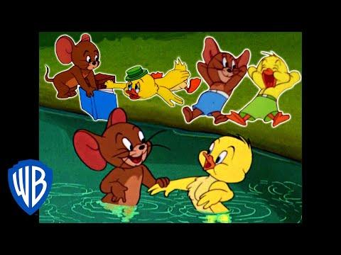 Tom a Jerry - Jerry  a malá kačka