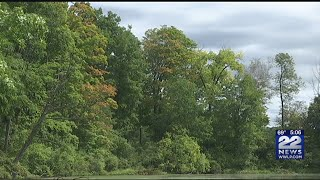 How the weather can affect the fall foliage