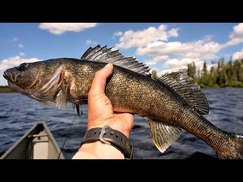 5 Days LIVING in the WILD-Slaying EPIC Walleye fish for Dinner-STRANDED SERIES e4