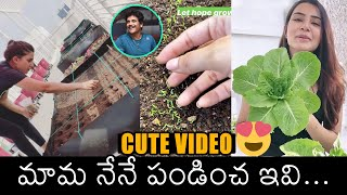 Samantha Akkineni names her terrace garden as 'Happy Place..