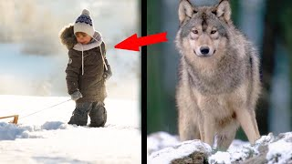 The wolf recognized the boy years later and saved him from a wolf pack