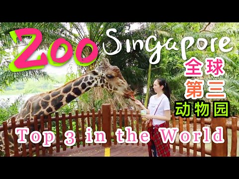 Singapore Zoo#新加坡动物园#top3ZooInTheWorld