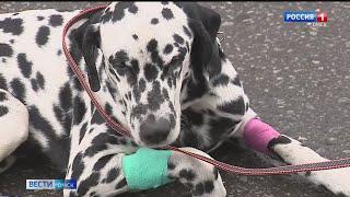 Омичу, выбросившему собаку из окна, грозит уголовная ответственность