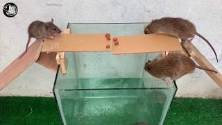Top 10 Piège à souris | Meilleure idée piège à souris eau 🐭 Top 10 Piège à rats # 03