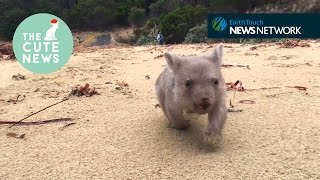 Wombat cuddles, a rumbustious baby rhino and the happiest stoat in the world!