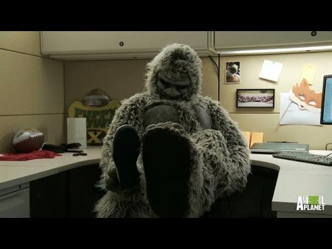 Ripped from the Headlines in Idaho | Finding Bigfoot - Animal Planet  - M-3brVHNyCY -