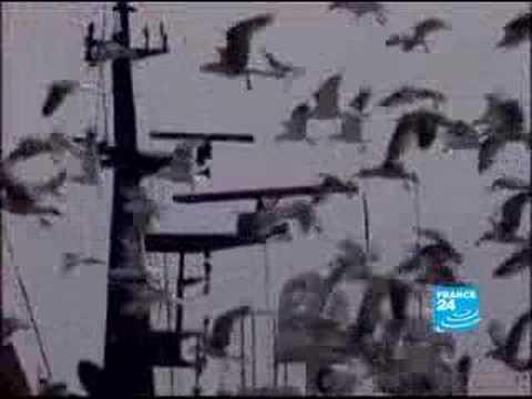 Morocco\'s fishing community struggles