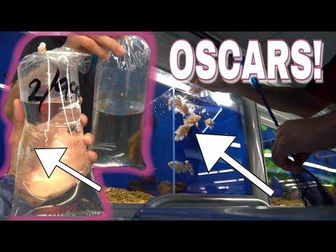 The Aquarium FISH You Wanted! *OSCARS*