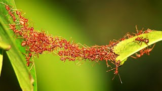 5 Умнейших насекомых в мире