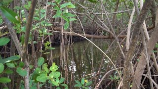 NASA Finds Cause of Florida Mangrove Forests Die-off