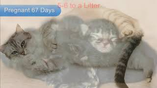 Why do Mother Cats Kill or Eat their Kittens
