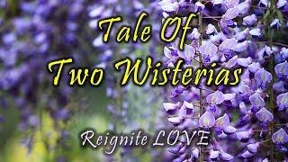 SPRING WISTERIA INSPIRATION: Tale of Two (Beautiful) Wisterias, Vivaldi's Spring Music