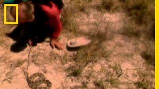 ガラガラヘビ1