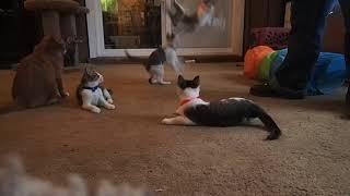 Kitten Montage 1