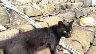 黒猫の散歩についていってみました。